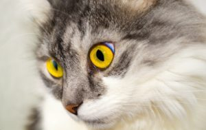 cat Specialized Veterinary Services